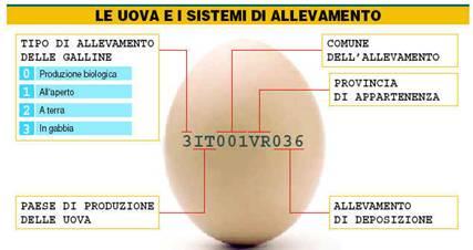 Uova oggi o gallina domani? 1