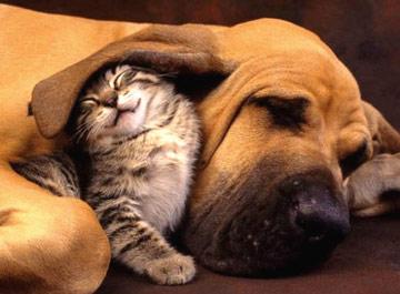 La salute degli animali domestici è ora in rapido declino