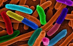 Epidemia E.coli, nessun caso in Italia