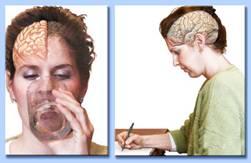 emisferi cerebrali